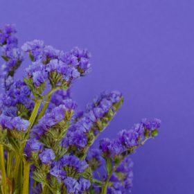 fleurs shutterstock_1013443801