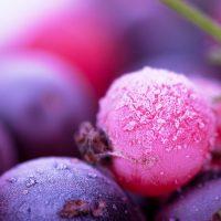 UV fruits shutterstock_84073735